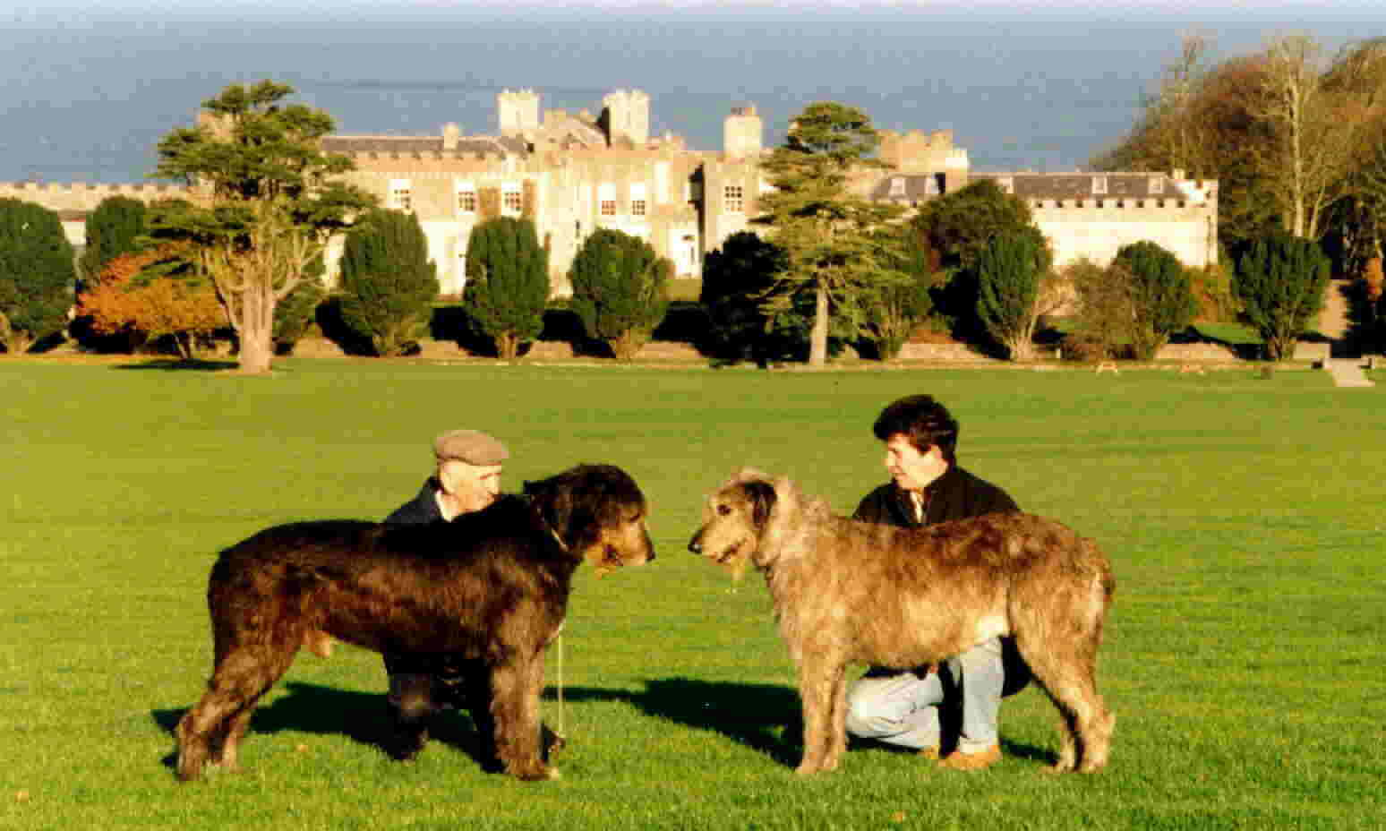 Ardgillan Castle Skerries with Nutstown Irish Wolfhounds